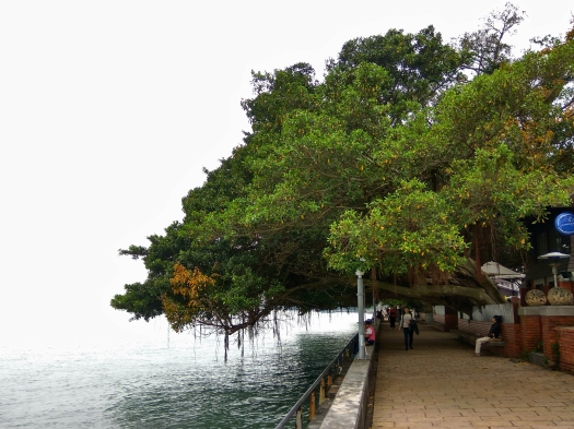Tamsui Old Street - Tree Beside the River